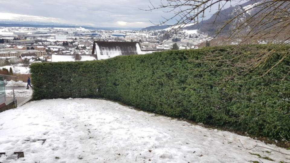 Winterschnitt11