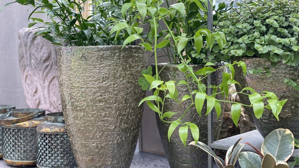 Zimmerpflanzen1