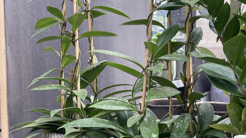 Zimmerpflanzen2